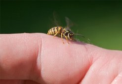Правила обработки укуса насекомого: средства для заживления раны